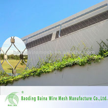 Stainless Steel Architectural Surface Plant Climbing Net