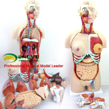 TUNK ANATOMY 12015 Plastic 29 Partes, 85cm Medical Education Tool Anatomía Torso Modelos Dual-Sex