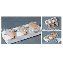Fortgeschrittene künstliche anatomische medizinische Modell Uterus