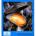 frozen half shell mussel
