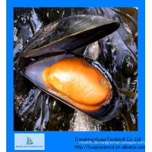 Gefrorene halbe Muschelmuschel