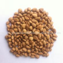 nouvelle récolte 100% pur naturel noix de pin sauvages comestibles