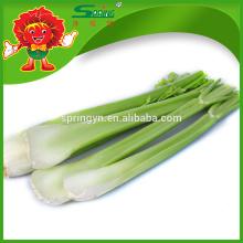 Органические зеленые овощи натуральный сельдерей на продажу