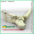 WHOLESALE SIMULATION BONE 12317 Medical Anatomy Artificial Tibia with Foot Bone , Orthopaedics Practice Simulation Bone
