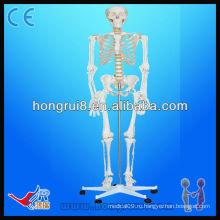 Скелет с медицинской анатомией (85 см) с мини-человеческими скелетами