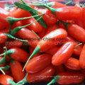 Superfood seco Goji Berry em Ningxia - 380grains / 50g