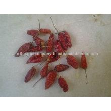 Longi Chili Supplier