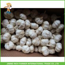 Chinês fresco puro alho branco de alta qualidade saco de malha de 5,5cm em caixa
