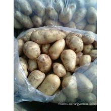 2015 Новый Картофель Fresj высокого качества урожая