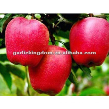 chinese new crop huaniu apple