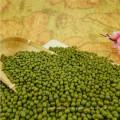 Haricots mungo haricots mungo verts de qualité supérieure pour la germination avec des prix compétitifs en vente