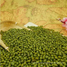Prime quality Green Mung Beans mung beans for sprouting with competitive price on sale