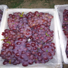 2017 New fresh red globe grapes new arrival red table grapes