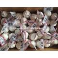Alho branco puro 3P * 80 / carton China Jinxiang alho fresco