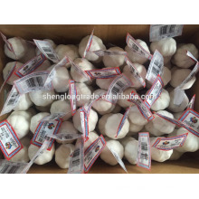 Pure white garlic 3P*80/carton China Jinxiang fresh garlic
