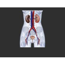 (Ципрофлоксацина Лактата) -Антибактериальное Высокое Качество Ципрофлоксацина Лактата