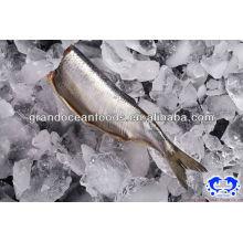 frozen herring fillet IQF