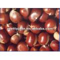 Best fresh castnuts para venda