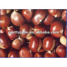Castañas frescas (60-80)