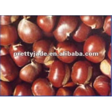 Best fresh castnuts para la venta