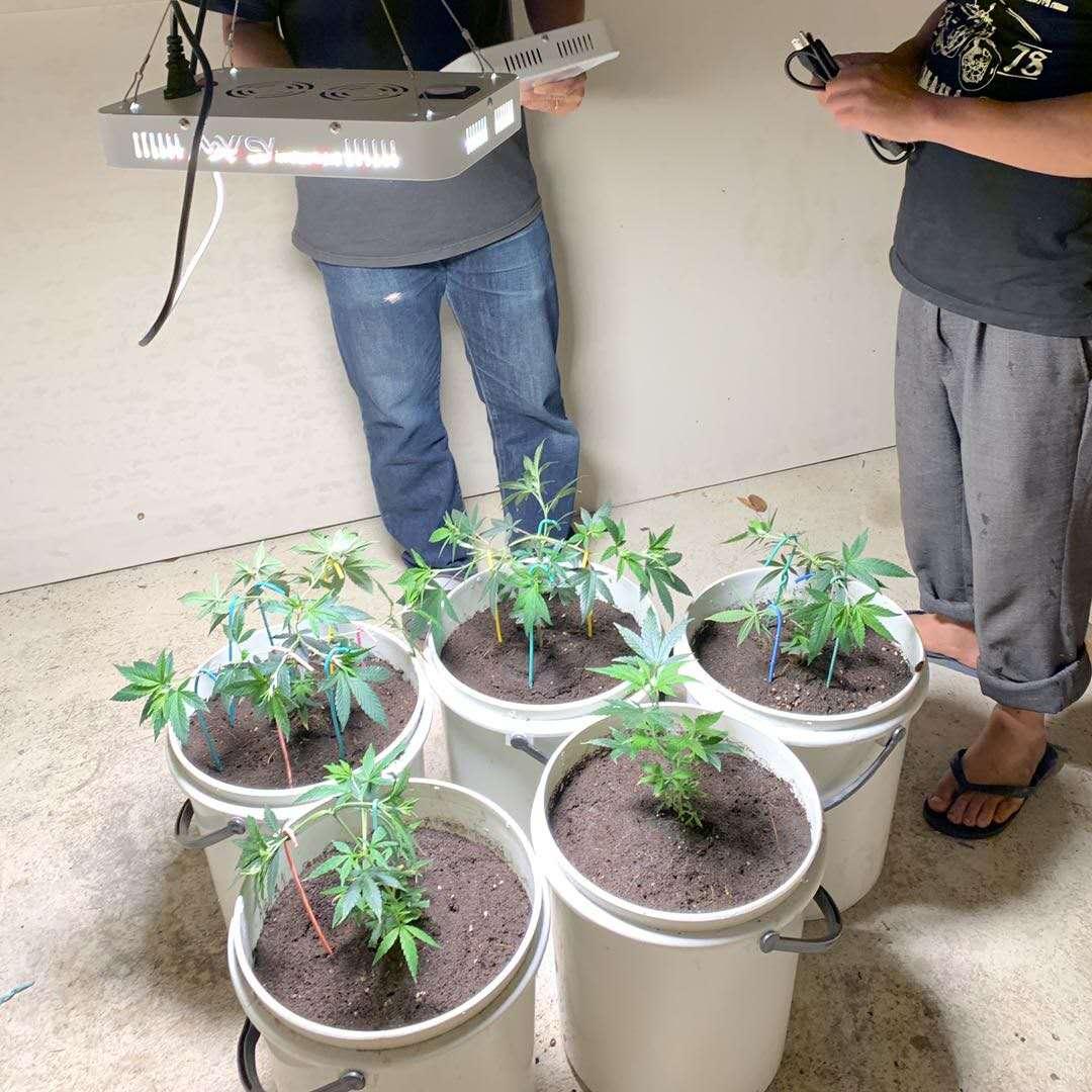 grow light 1000 watt