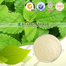 Wild Mint Leaf Extract