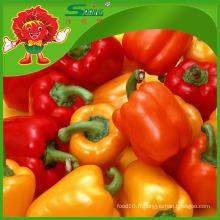 Poivrons ronds à base de poivrons rouges à la couleur poivrons frais à la citron poivrons jalapeno frais