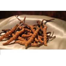 สารสกัดจากสารสกัดจากธัญพืช Cordyceps polysaccharide