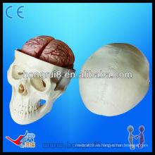Modelo de la educación del cráneo de la alta calidad, modelo del cráneo con el cerebro de 8 piezas, modelo del cráneo del pvc