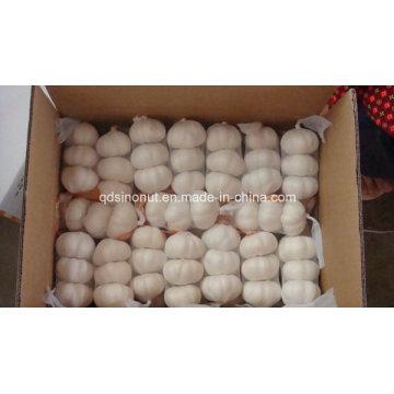 Seleccione China Garlic 3p 10kg / Carton