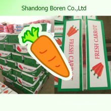 2015 Neue hochwertige frische organische Karotten