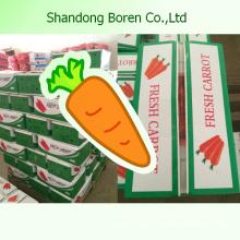 2015 New High Quality Fresh Organic Carrots