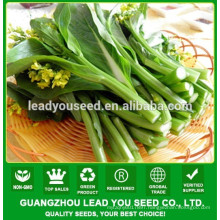 NCS02 Haore choy sum seeds for planting,seeds factory