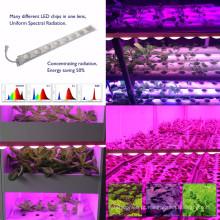 O crescimento completo das frutas e legumes do espectro que ilumina o diodo emissor de luz cresce a hidroponia da estufa da luz