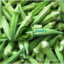 Fresh Okra High Quality with Competitive Prices