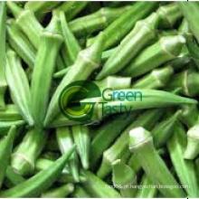 Fresh Okra alta qualidade com preços competitivos