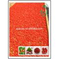 Mayor secado de Goji Berry exportación Brasil EE. UU. Rusia, wolfberry Gran secado exportación de Goji Berry Brasil EE. UU. Rusia