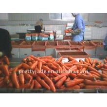 Preminum cenoura para exportação