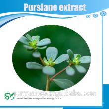 Extrait de Purslane Extra Extrait / Purslane Powder / Portulaca Oleracea extrait en poudre