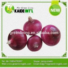 High Quality New Crop Fresh Red Onions