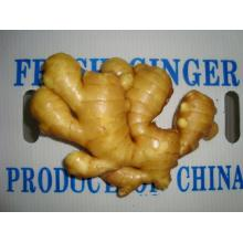 2016 Hot sale fresh ginger