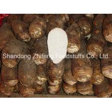 China New Crop legumes frescos Taro com melhor qualidade