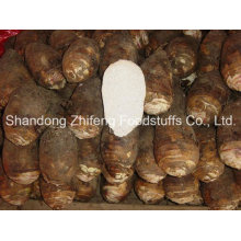 China New Crop Fresh Taro Vegetables with Best Quality