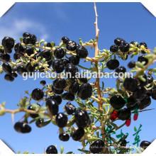 Черный большой размер ISO сертифицированные ягоды Годжи