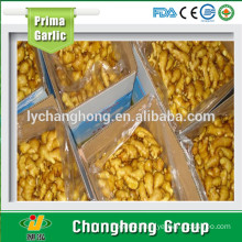 hot sale best quality fresh ginger