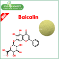 Natural Baical Skullcap Extracto Baicalin
