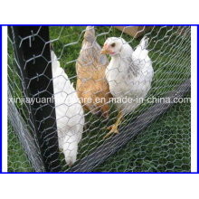 Hot DIP Galvanized Hexagonal Chicken Wire Netting
