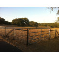 Cattle Agriculture Field Fence