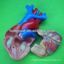 ISO tamanho da vida modelo do coração humano, modelo de coração educacional, modelo de coração anatômico