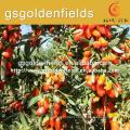 100% organic dried goji berry
